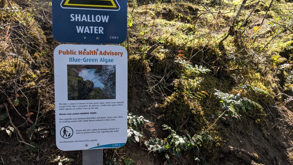 While the water advisories are in effect, warning signs have been installed near the beaches. (CTV Vancouver Island)