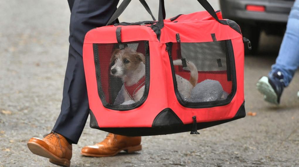 Boris Johnson puppy