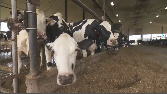 Quebec dairy farmers struggling with new open markets