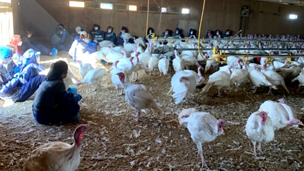 Activists charged after sit-in at southern Alberta turkey farm