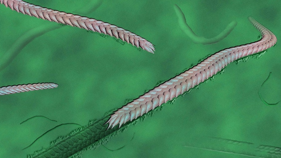 An artist's reconstruction of what the Yilingia spiciformis worm looked like. (AFP)