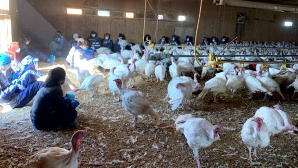 calgary, jumbo valley turkey farm, fort macleod, l