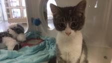 Stratford cat