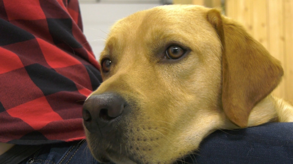 Dogs With Wings seeks foster homes for future guide dogs