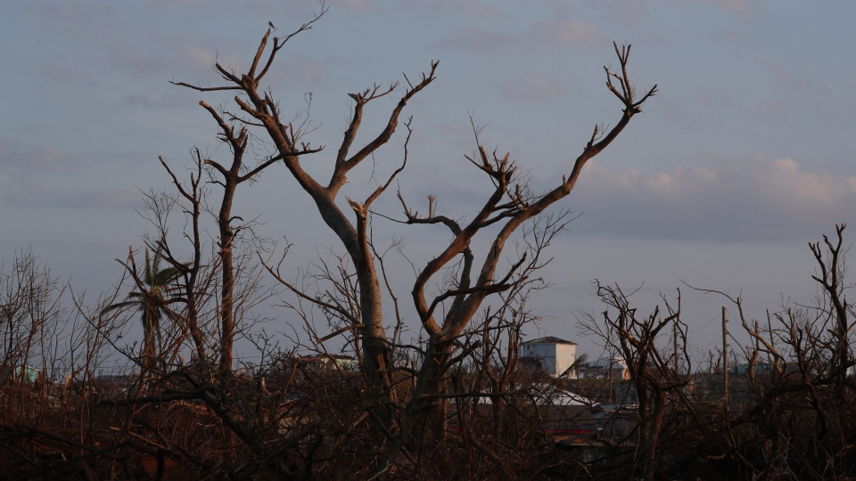 Broken trees, is silhouetted by the the sunrise, in the aftermath of Hurricane Dorian in Marsh Harbor, Abaco Island, Bahamas, Saturday, Sept. 7, 2019. (AP Photo/Fernando Llano)