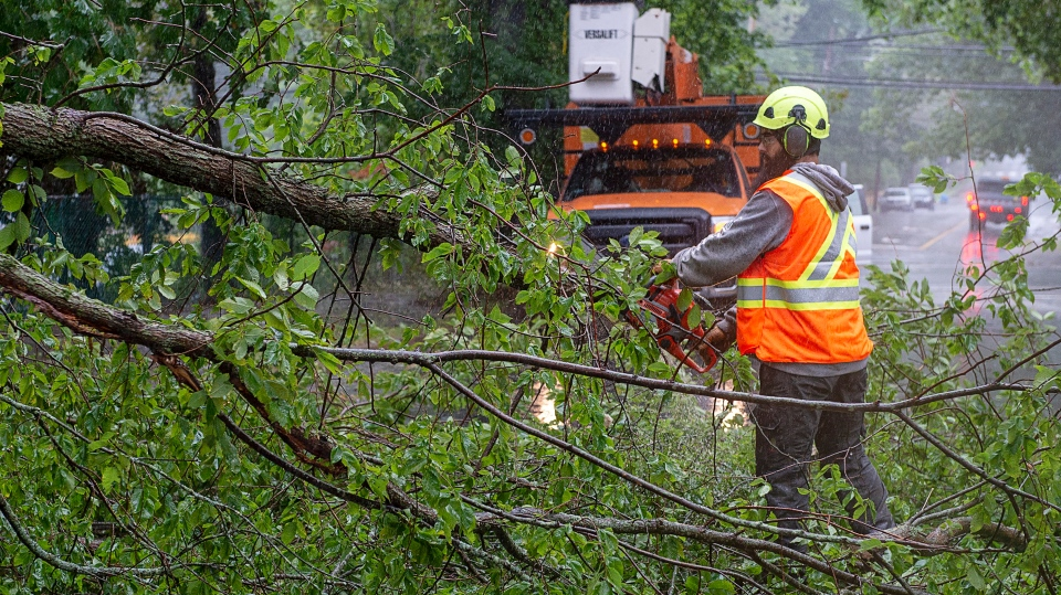 A worker removes a fallen tree blocking a road in Dartmouth, N.S. as hurricane Dorian approaches on Saturday, Sept. 7, 2019 (THE CANADIAN PRESS/Andrew Vaughan)