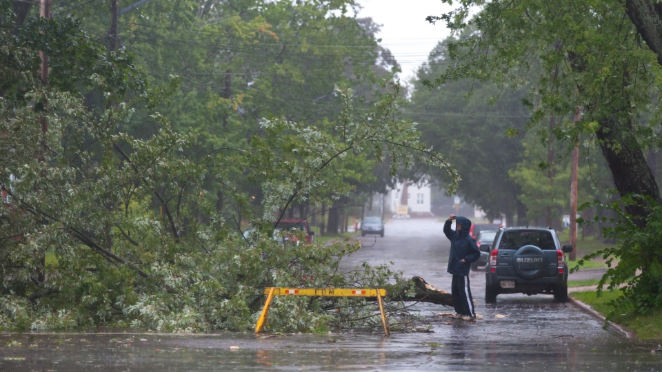 A man looks a tree that fell on Cameron street in Moncton, N.B. as a result of hurricane Dorian pounding the Atlantic Provinces with heavy rain and winds on Saturday September 7, 2019. THE CANADIAN PRESS/Marc Grandmaison