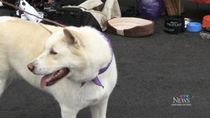 Annual 'All Heart Pet Rescue Walk-a-thon'