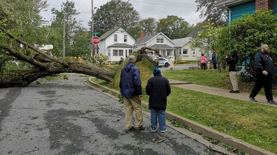 Residents survey the damage on Almon Street in Halifax on Sept. 8, 2019, after Dorian moved through the region. (Amy Stoodley/CTV Atlantic)