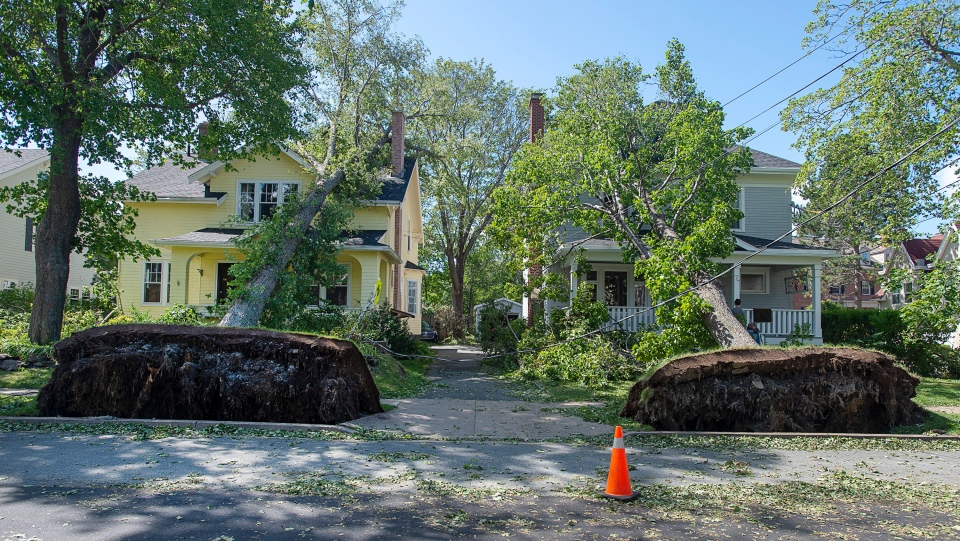 Two fallen trees rest on neighbouring houses in Halifax on Sunday, Sept. 8, 2019. (THE CANADIAN PRESS/Andrew Vaughan)