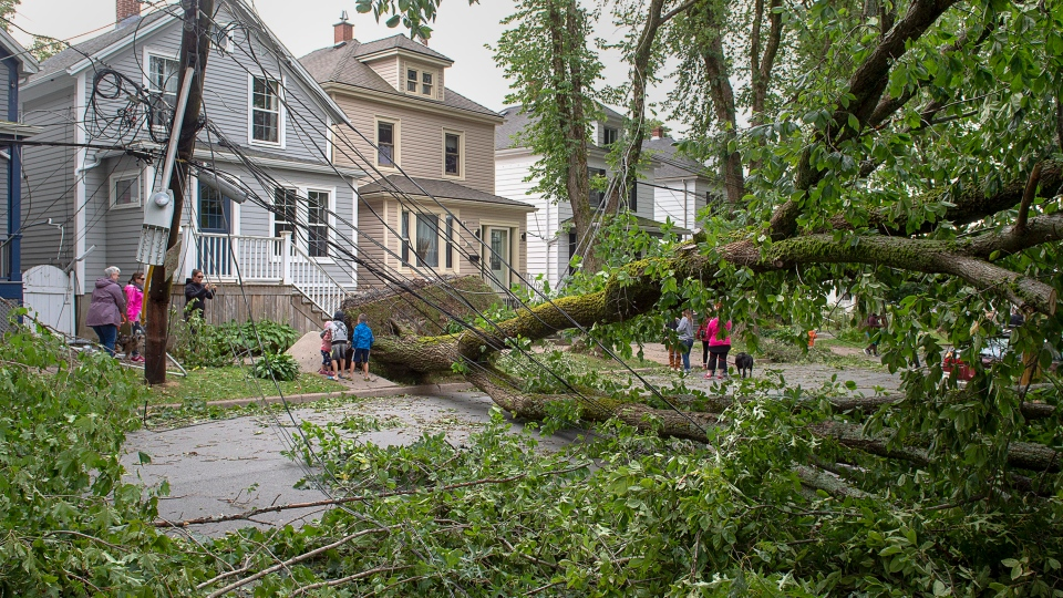 A street is blocked by fallen trees in Halifax on Sunday, Sept. 8, 2019. Hurricane Dorian brought wind, rain and heavy seas that knocked out power across the region, left damage to buildings and trees as well as disruption to transportation. (THE CANADIAN PRESS/Andrew Vaughan)