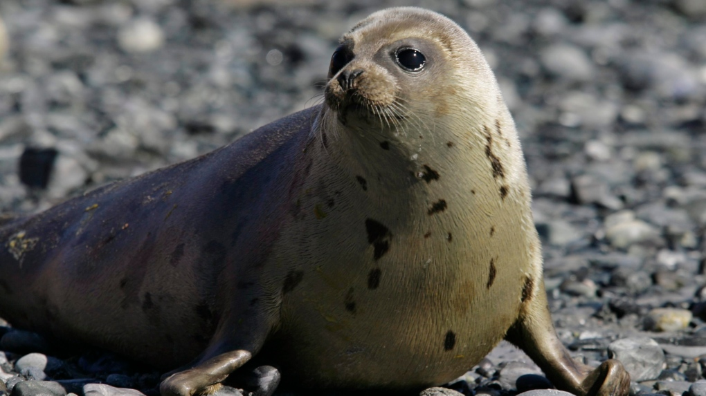 U.K. community group buys town's supply of plastic ring toys to save seals