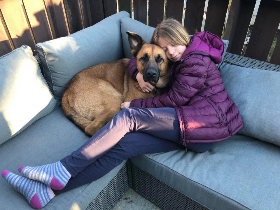 Missing dog Sami