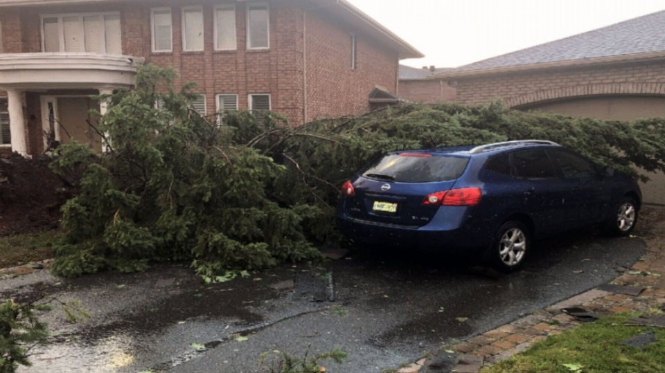 This evergreen tree was toppled after a tornado rippled through an Ottawa-area neighbourhood in 2018. Tree Canada, an Ottawa-based charity, replaced it with a lilac tree.
