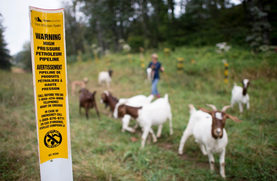 A Trans Mountain pipeline sign is seen as Barbara Gard walks her goats down her property which borders the Trans Mountain pipeline and is where construction will take place for the expansion taking away grazing land for her goats and other livestock in Abbotsford, B.C., Tuesday, September, 10, 2019. THE CANADIAN PRESS/Jonathan Hayward