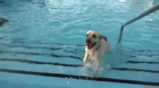 Dog pool party fundraiser