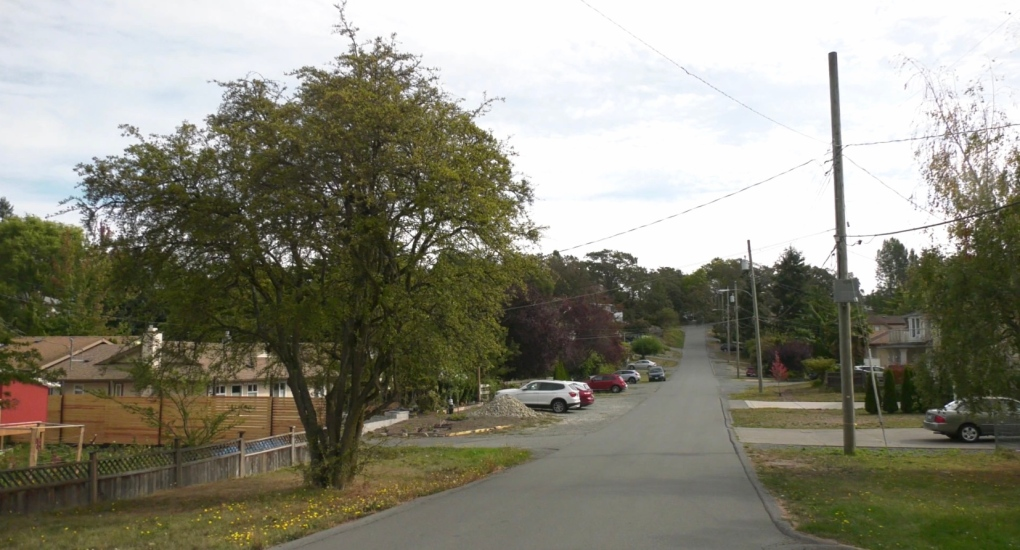Saanich council backs plan to boost tree protection, increase removal fees