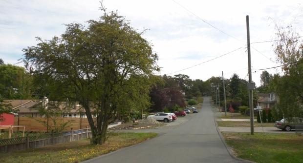 Saanich trees