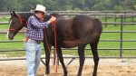 Power of horses harnessed as therapeutic tool