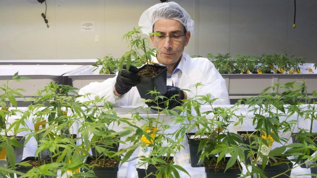 Aurora Cannabis Edmonton