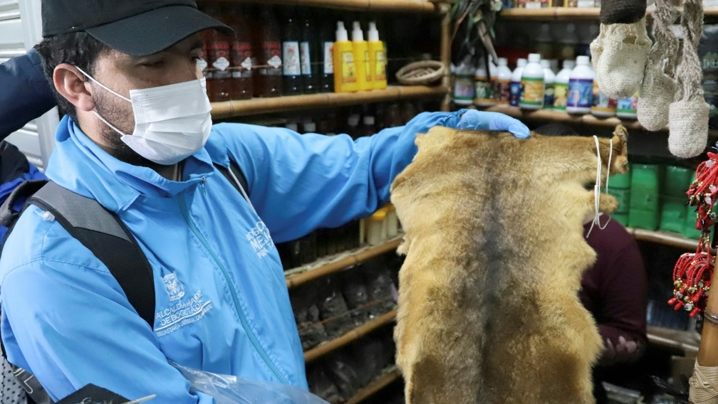 Colombian authorities seize animal parts sold for rituals