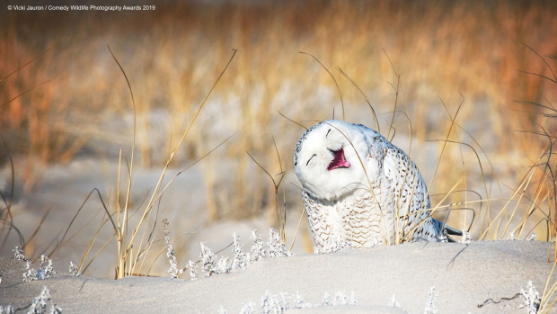 Funny animal moments celebrated in 2019 Comedy Wildlife
