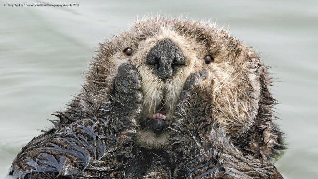 Funny animal moments celebrated in 2019 Comedy Wildlife Photography Awards