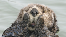 Competition finalist Harry Walker's 'Oh My' (Comedy Wildlife Photography Awards)