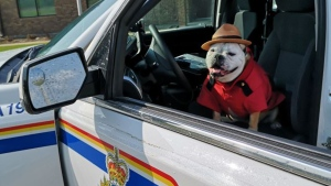 Dogstable Abbey is the newest member of the Carrot River RCMP. (Twitter: RCMP)