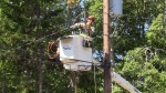 Digby County gets back on the grid
