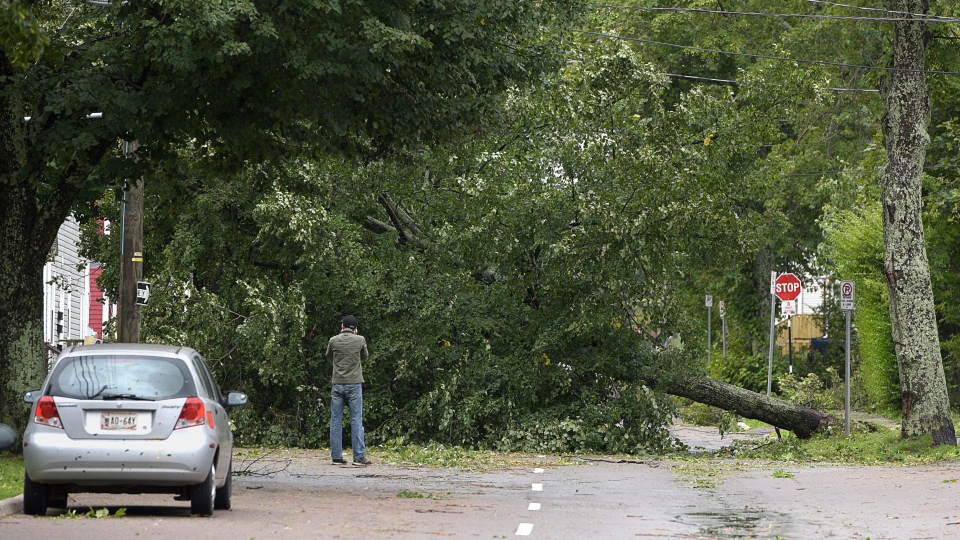 An unidentified man takes a photo of a fallen tree in Charlottetown on Sunday, Sept. 8, 2019. (THE CANADIAN PRESS/Nathan Rochford)