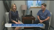 Local veterinarian answers viewer pet questions