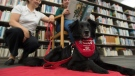 "Anna Boekoven, right, and Ashten Black, from Saint John Ambulance therapy dogs, read to a dog named ""Pig"" at the Vancouver Public Library in downtown Vancouver, Friday, Sept. 13, 2019. THE CANADIAN PRESS/Jonathan Hayward"