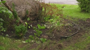 A driver left his 20-year-old passenger trapped in the car after crashing into a tree in Saint Lazare Sept. 14.