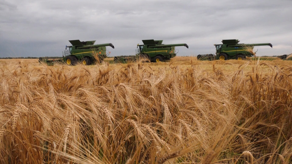 Alta. farmers harvest crop for charity, despite cool and wet weather