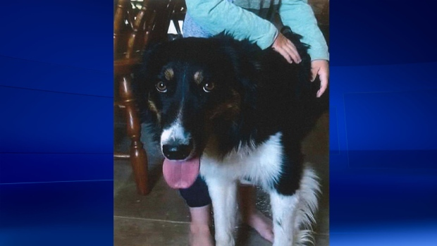 OPP investigating theft of dog from home near Mitchell