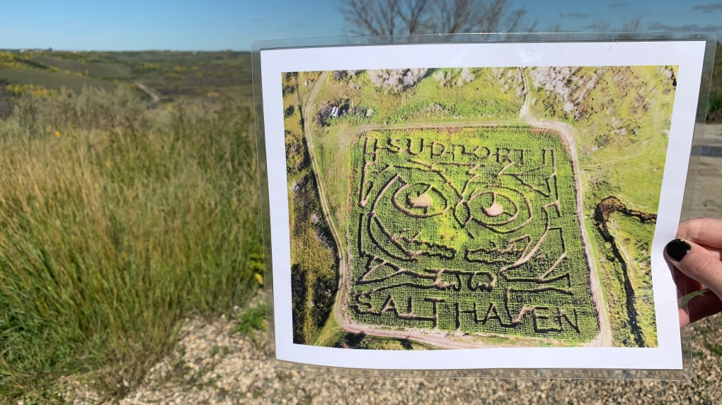 Injured owl inspires corn maze design near Lumsden