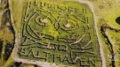 Corn maze inspired by injured owl