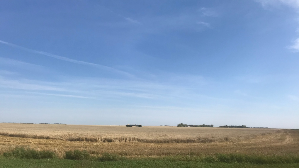 Saskatchewan producers happy with hot, dry conditions