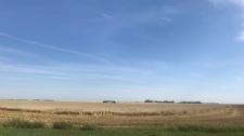 Saskatchewan Harvest