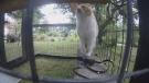 Sawatsky Sign-Off- The Cat House