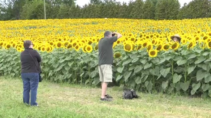 Visitors stop to take photos at 'Miracle Max's Minions' near Forest, Ont. (Bryan Bicknell / CTV London)