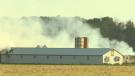 Fire crews were on scene Wednesday morning battling a fire at a pig barn near Tavistock.