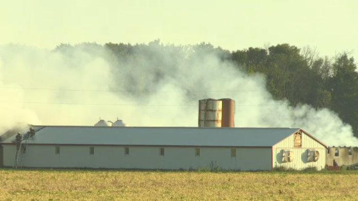 Fire crews were on scene Wednesday morning battling a fire at a pig barn near Tavistock.