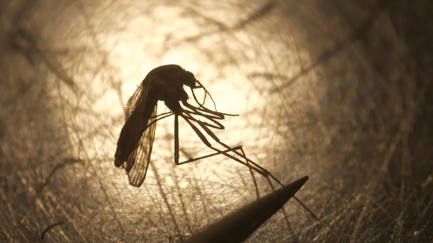 Mosquito-borne EEE virus kills 'perfectly healthy' man in 9 days
