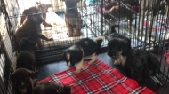 Dogs rescued from the landfill now in Calgary