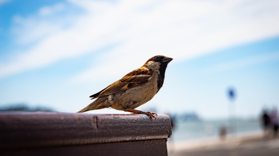 "Bird species once considered ""abundant"" are becoming more scarce in Canada and the U.S. after decades of decline that amounts to a net loss of almost 3 billion birds since 1970, according to new analysis. (Pexels/Magda Ehlers)"