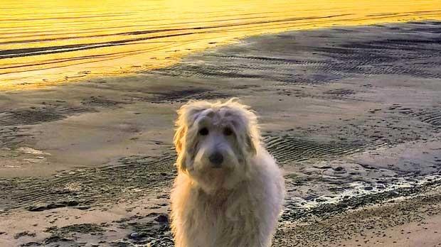 Mia on the beach at Mantago Bay. Photo by Rick Masterman.