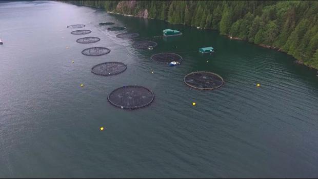 B.C. fish farm
