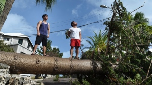 Men stand on a tree